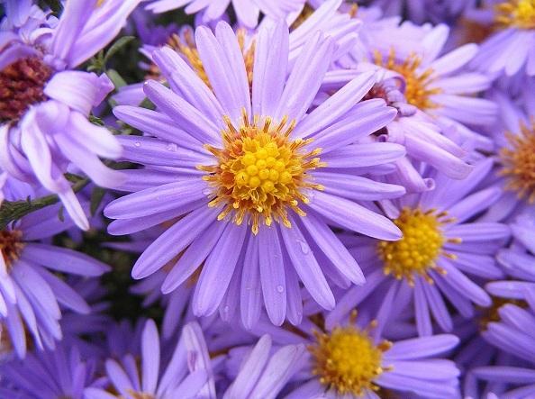 kvety-26724270